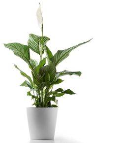 5 Hardy Hard-to-Kill Houseplants for Apartments with Low Light — Apartment Therapy's Home Remedies | Apartment Therapy
