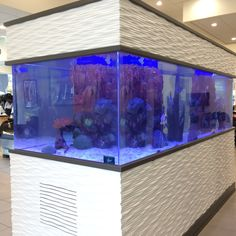 Salt water tank. I spent a long time mesmerized by it yesterday. Want one soooo bad