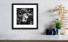 Coneflowers in black and white                 #flower #floral #coneflower #wallart #garden #homedecor #blackand white