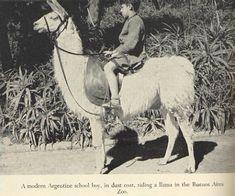Boy riding Llama