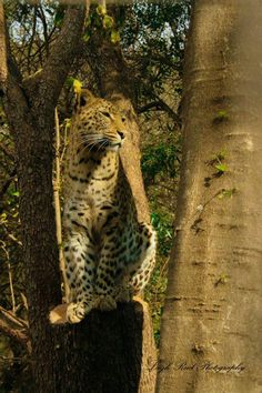 Kruger National Park, Tree Stump, Primates, Lonely Planet, Big Cats, Travel Guide, South Africa, Wildlife, Animals