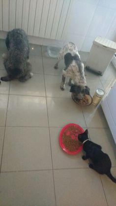 Desayuno en harmonia