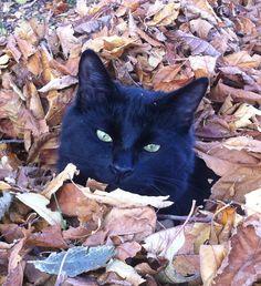 Cat in leaves