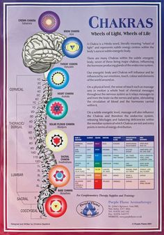 An A3 poster that details the 7 Chakras of the body with information about: Name Location Colour Emotion Endocrine gland Psychological Function Area Governed