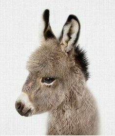 So cute - love this little guy. why are donkeys so cute??