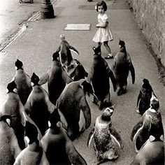 First the penguins came for your children.