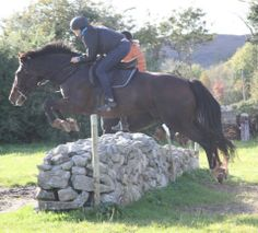 Romeo(ISH for sale) jumping cross country.  #video available