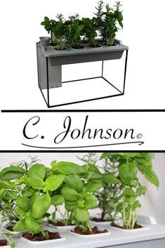 C. Johnson's Aquaponik System! Kräuteranbau, Microgreens, Salatanbau und gleichzeitig ein tolles Aquarium! Ob in der Küche, Büro oder Essbereich das System macht immer eine gute Figur! Viel Spaß damit ;) !!!!! by  C. Johnson ©
