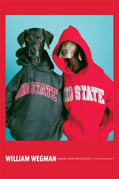 William Wegman: Gray and Scarlet Poster