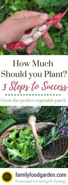 Garden Planning ~ How Much to Plant -