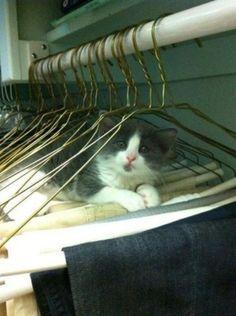 Schattige katten: Sorry, het moest even