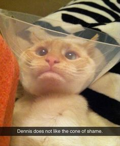 Attack Of The Funny Animals - 35 Pics