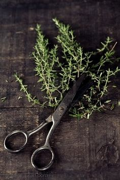 The answer is always Rosemary AND Thyme. They smell divine