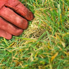 Organic Lawn Care Basics! Several Tips on how to care for your grass organically!