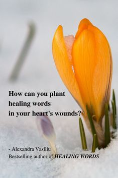 Learn how to heal your heart's wounds. My bestselling poetry book Healing Words is your perfect tool for mending your inner wounds. Grab your beautiful copy today on Amazon. Much love and gratitude to all those who refer Healing Words to their friends and write a short Amazon review, showing their appreciation. #deepquotes #sadquotes #poetry #poems #inspiringquotes