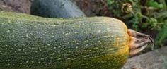 Cucinare le zucchine al vapore: una ricetta light