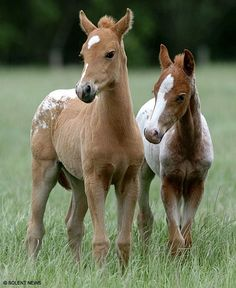:) Cute Horses, Pretty Horses, Horse Love, Beautiful Horses, Animals Beautiful, Pretty Animals, Zebras, Horse Pictures, Animal Pictures