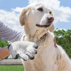 With the new InnovaGoods Home Pet pet brush & massage glove your pets' hair will always looks perfect, whilst they also enjoy a pleasant massage! Animal House, Background Patterns, Your Pet, Labrador Retriever, Cool Things To Buy, Pet Pet, Boutique, Products, Massage