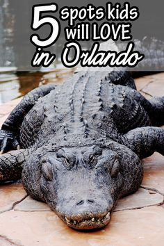 There is so much for the whole family to do in Orlando, Florida whether you decide to hit the Disney parks or try something off the beaten path!