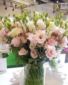 """114 Likes, 1 Comments - Kvety Silvia (@kvetysilvia) on Instagram: """"Šťastne sme sa vrátili z krásnej výstavy. Videli sme nové odrody ruží, tulipánov, ľalií, eustom a…"""""""