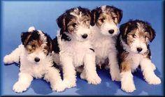 Social Pet Network www.coolpetz.com #CoolPetZ #cute #dog #puppy #animal #pets