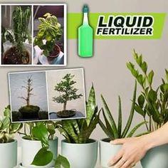 Plant Projects, Garden Projects, House Plants Decor, Plant Decor, Orchid Plants, Orchids, Hanging Plants, Indoor Plants, Household Plants