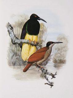 Doce-cableado ave del paraíso