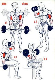 Fitness Illustration Description Biceps … Plus – Read More – Fitness Workouts, Weight Training Workouts, Gym Workout Tips, Dumbbell Workout, At Home Workouts, Deltoid Workout, Bodybuilding Training, Bodybuilding Workouts, Men's Bodybuilding