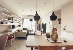 Contemporary Apartments with I-CHI Cat House | Home Design And Interior