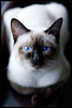 Beautiful blue eyes.