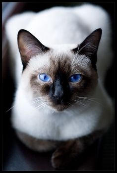 Gorgeous...This cat looks like my Marisa did.