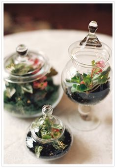 ALLY, you gotta do this! Little terrariums in glass containers for the centerpieces. Mini Terrarium, Terrarium Centerpiece, Garden Terrarium, Succulent Terrarium, Terrarium Ideas, Glass Terrarium, Botanical Wedding, Whimsical Wedding, Cactus Flower