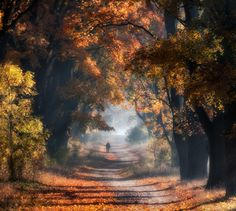 I Visited The Maple Alley In Złoty Potok, Poland To Capture The True Heart Of Autumn | Bored Panda
