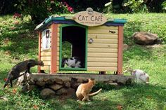 Cool outdoor feeding station for feral cats. I need to learn woodworking and carpentry skills. :-)