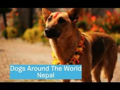 Dogs Around The World: Nepal - YouTube