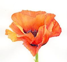 Hey, I found this really awesome Etsy listing at https://www.etsy.com/listing/286011997/watercolor-poppy-print-red-poppy
