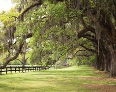 Popular items for spanish moss on Etsy