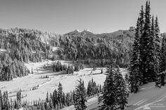 Steve G. Bisig posted a photo: A black and white landscape photograph of the snow-covered lower Paradise River Valley captured on a sunny winter day in the Paradise area of Mount Rainier National Park, Washington. Mount Rainier National Park, Black And White Landscape, Paradise Valley, Winter Day, Landscape Photographers, Washington State, National Parks, Explore, Nikon D700