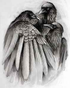 The Gathering - Crow Raven Black and White Print from Original Drawing Sick shoulder tattoo Crow Art, Raven Art, Bird Art, The Crow, Quoth The Raven, Crows Ravens, Bird Drawings, The Gathering, White Art