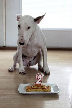 Seri is Two   Grain-free Dog Treats #birthdaydog