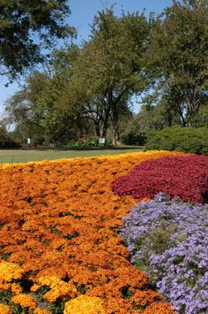 Fall is the best. Dallas Arboretum, Keller Williams, Autumn, Fall, Favorite Things, Texas, Country Roads, Usa, Nice