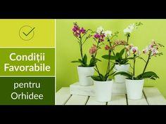 Conditiile favorabile pentru Orhidee - YouTube Plants