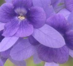Purple Flowers - Bing Images