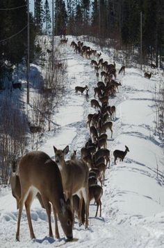 Beautiful.  Too get this many deer in one spot they have to be feeding them...