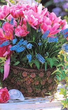 Schritt für Schritt zum bepflanzten Frühlingskorb -  Körbe als Pflanzgefäße unterstreichen den natürlichen Charme der Frühjahrsblüher. Mit Moos kann man sie auf schöne Art und Weise dekorieren.