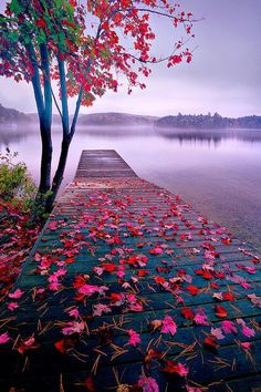 World Best Things: Beautiful Nature Lake Dock, Thousand Islands, Canada Beautiful World, Beautiful Places, Beautiful Pictures, Beautiful Scenery, Amazing Places, Natural Scenery, Beautiful Nature Photos, Beautiful Flowers, Beautiful Nature Wallpaper