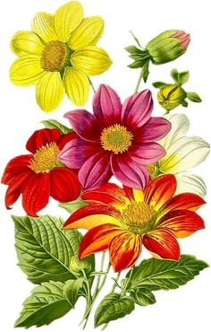 Gallery.ru / Фото #27 - цветы в акварели 3 - ninmix