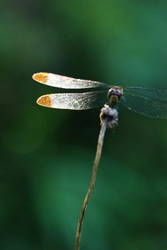 wings by *SuiKa* on Flickr.