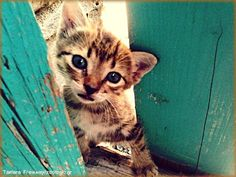 Ένας μικρός γάτος μπόμπιρας στην Καβάλα