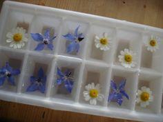 DECOR CUBOS DE GELO - flores comestíveis e flores de camomila